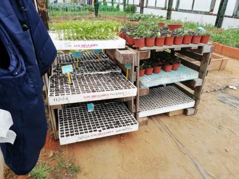 invernadero semilleros (1)