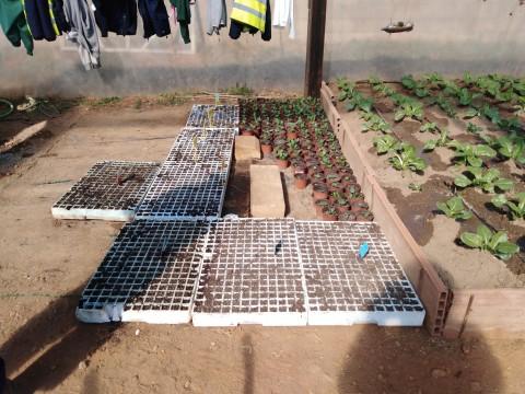invernadero semilleros (2)