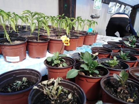 invernadero semilleros (3)