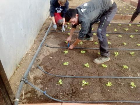 riego y plantacion 1