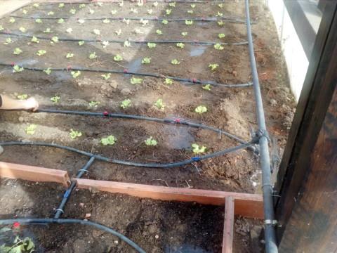 riego y plantacion 2
