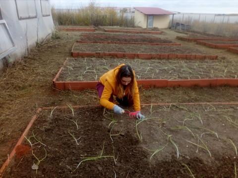 riego y plantacion 3